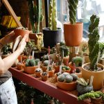 Tula Plants & Design, Greenpoint, NYC Plant stores, houseplants, cacti, succulents
