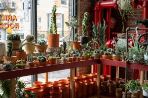 Tula Plants & Design, Greenpoint, NYC Plant stores, houseplants, cacti, succulents