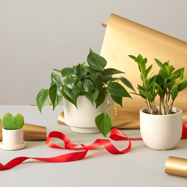 2019 gift guide: The best gifts for plant lovers