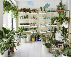 The Sill, Cobble Hill, NYC plant shops