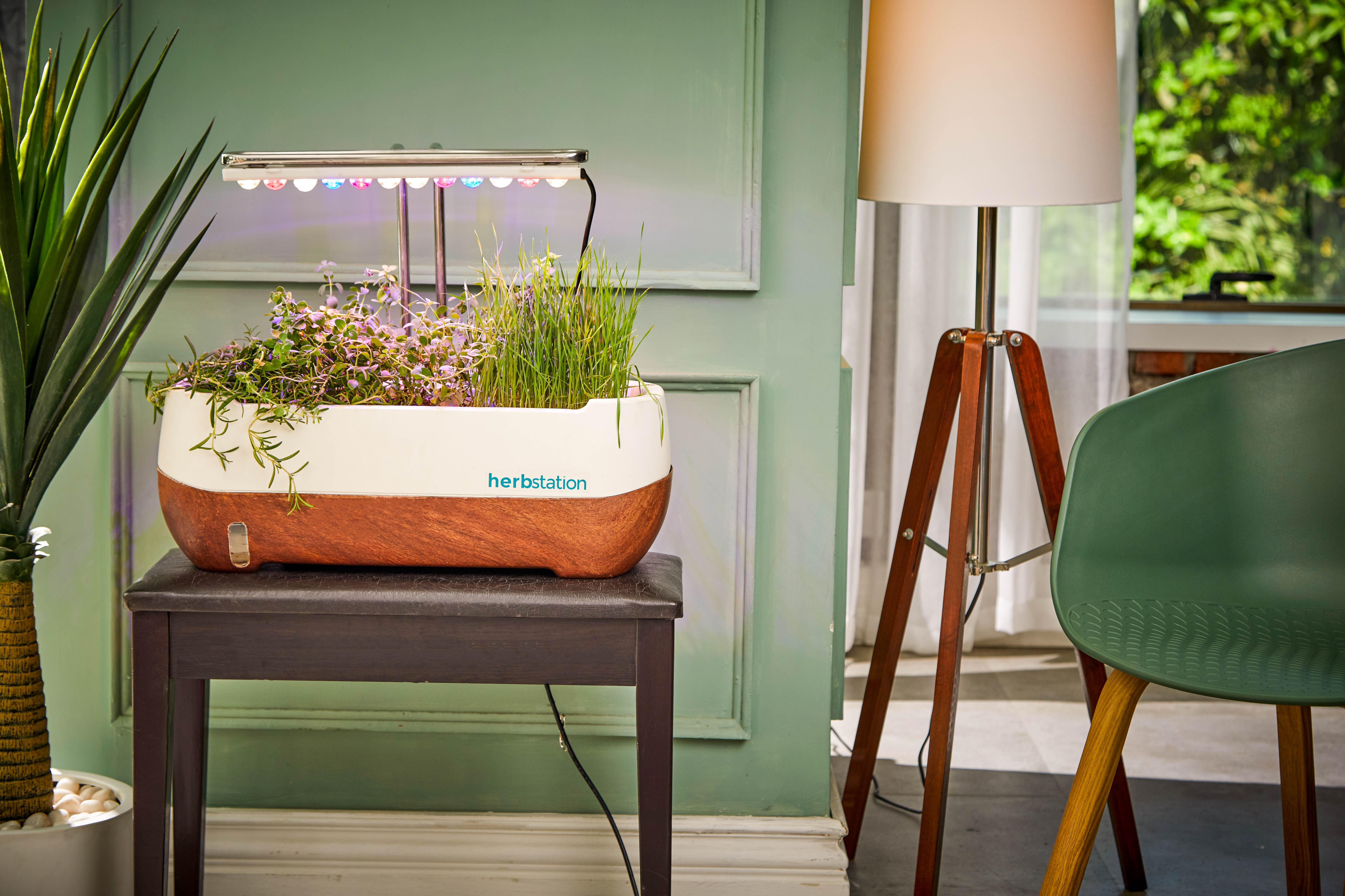 13 simple ways to green your apartment   6sqft