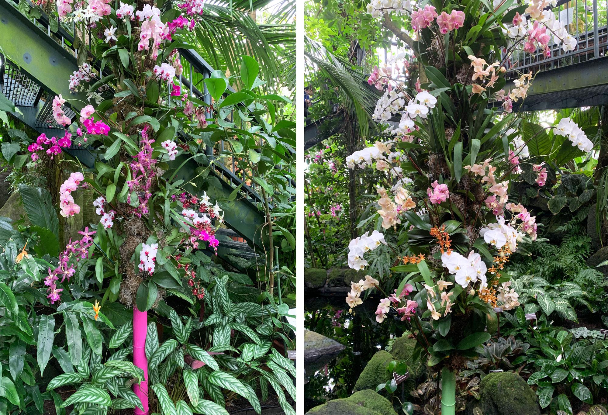 NYBG orchid show Kaleidoscope Jeff Leatham 21