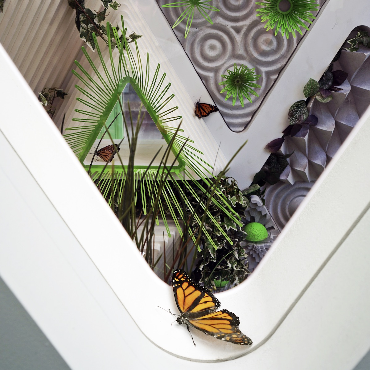 butterfly sanctuary, monarch sanctuary, terreform one, nolita, 23 cleveland place, architecture