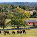 Stonewall Farm, Barry Schwartz, equestrian estate, westchester