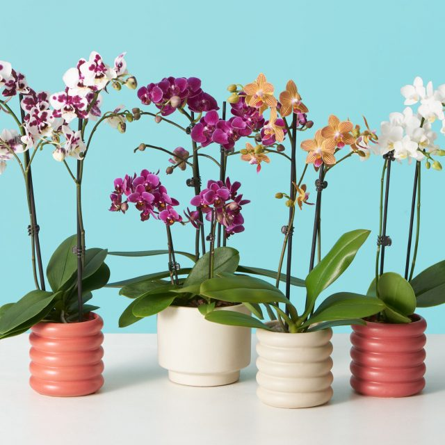 12 flowering houseplants to brighten up your home