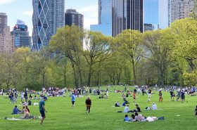 sheep meadow, central park, social distancing parks